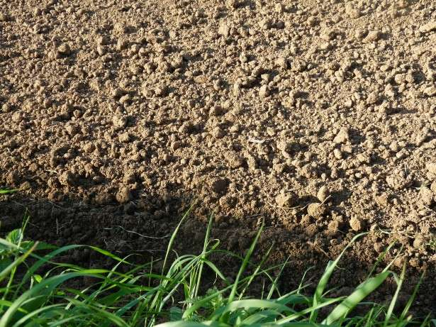 Earths soils could play key role in locking away greenhouse gases